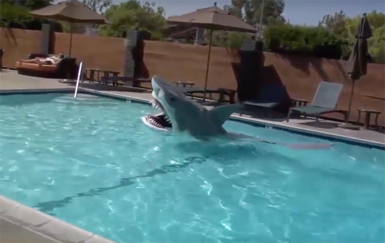 Animatronic Shark - A realistic costume to scare all the swimmers