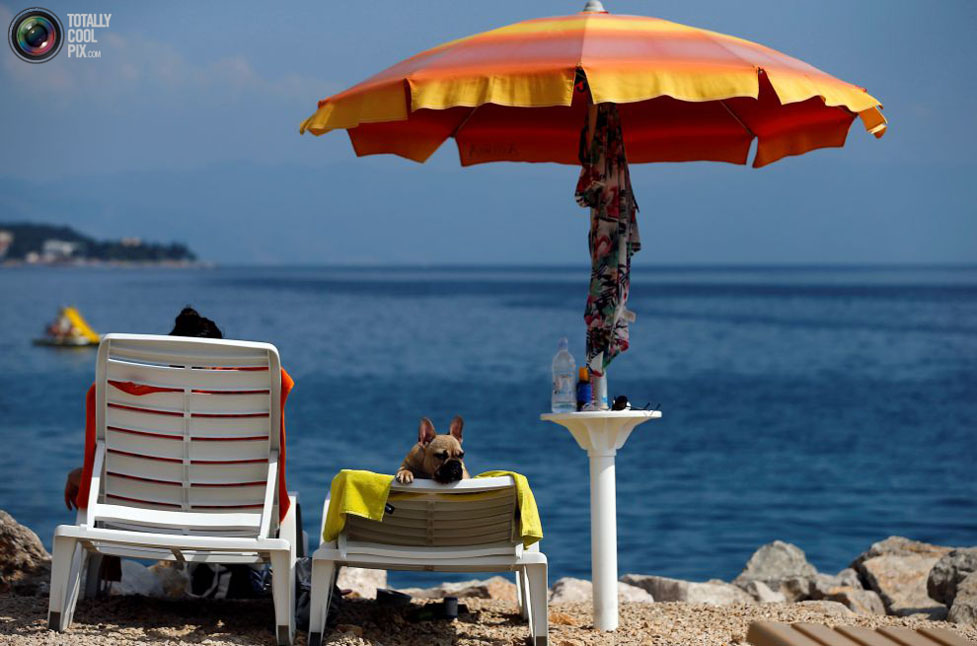 Собачий пляж с баром в Хорватии / Crikvenica dogs beach and bar