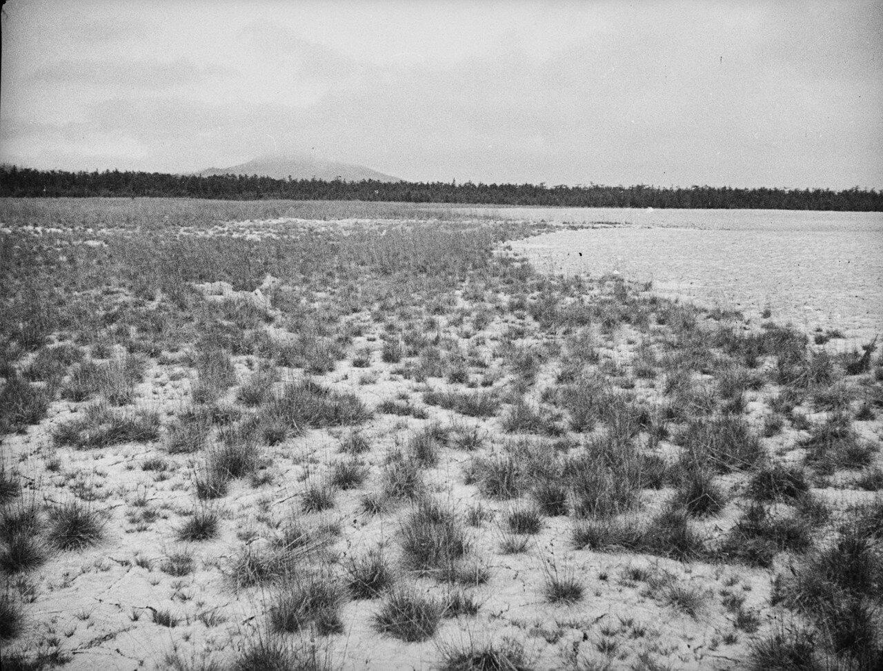 Южно-Сахалинский грязевой вулкан. Зона III (внешняя зона)