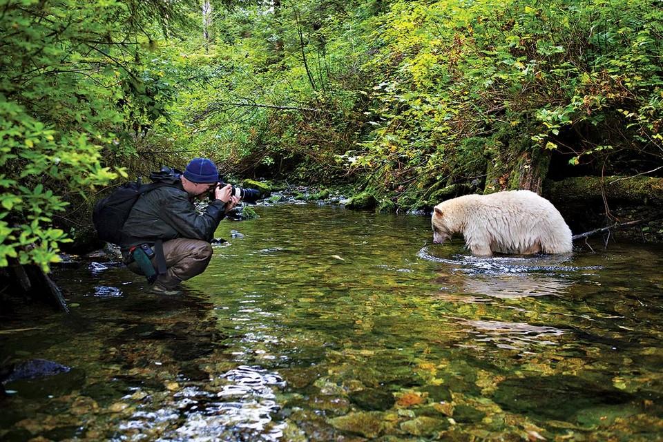 Жизнь медведей на снимках  Пола Никлена