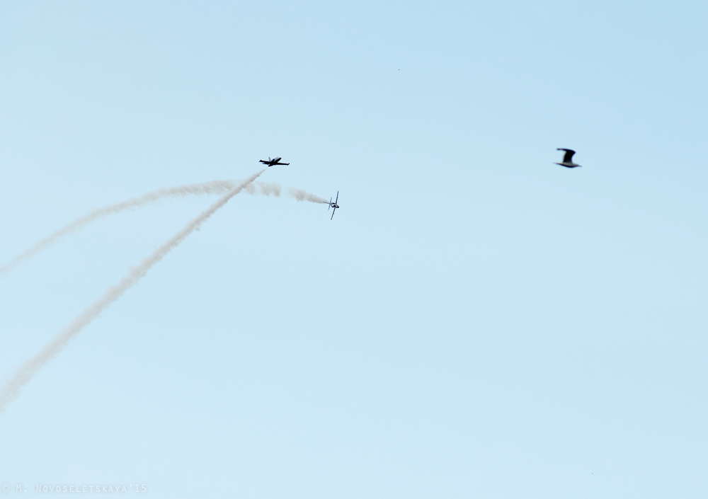 Вот, например, фигура высшего пилотажа «Вентилятор» — в кадр удачно попала чайка.