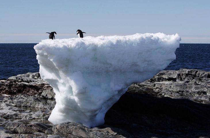 По словам академика Владимира Михайловича Котлякова, ледниковый покров материка образовался не