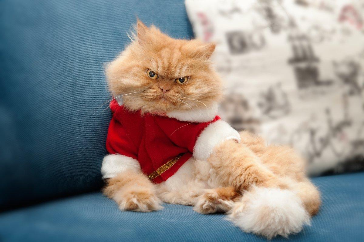 Мониторинг настроения кота. Не секрет, что коты, воспитанные в человеческой семье, совсем как люди п