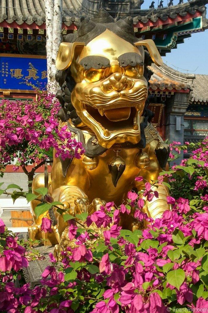 Золотой лев, монастырь Лингуан, Бадачу