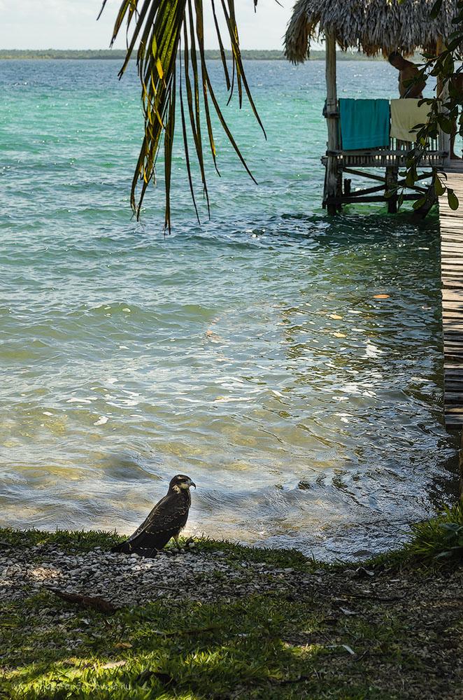 Фото 14. На берегу лагуны Бакалар (la laguna de Bacalar). Мексика. Тур по стране на машине, взятой напрокат. 1/640, 9, 55, 320.