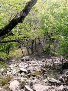 На склонах горы Индюшка... SAM_6736.JPG