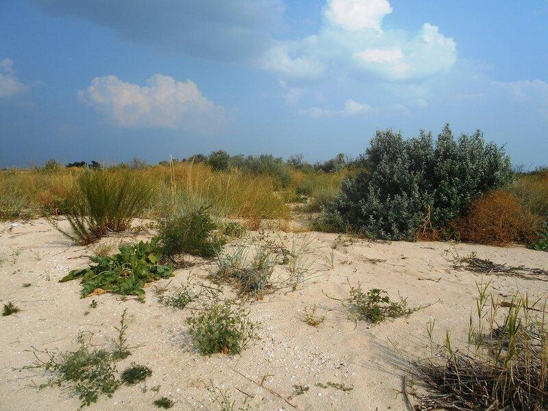 На косе, пески, растительность ... DSCN7357.JPG