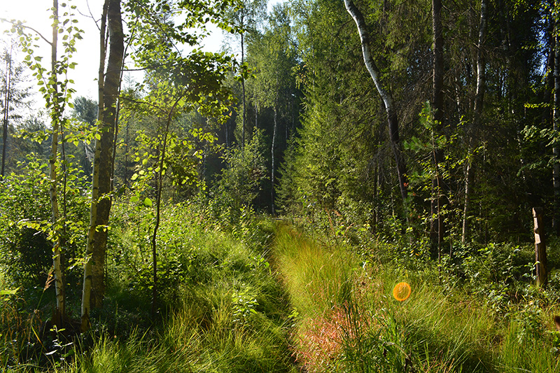 лес 2016.jpg