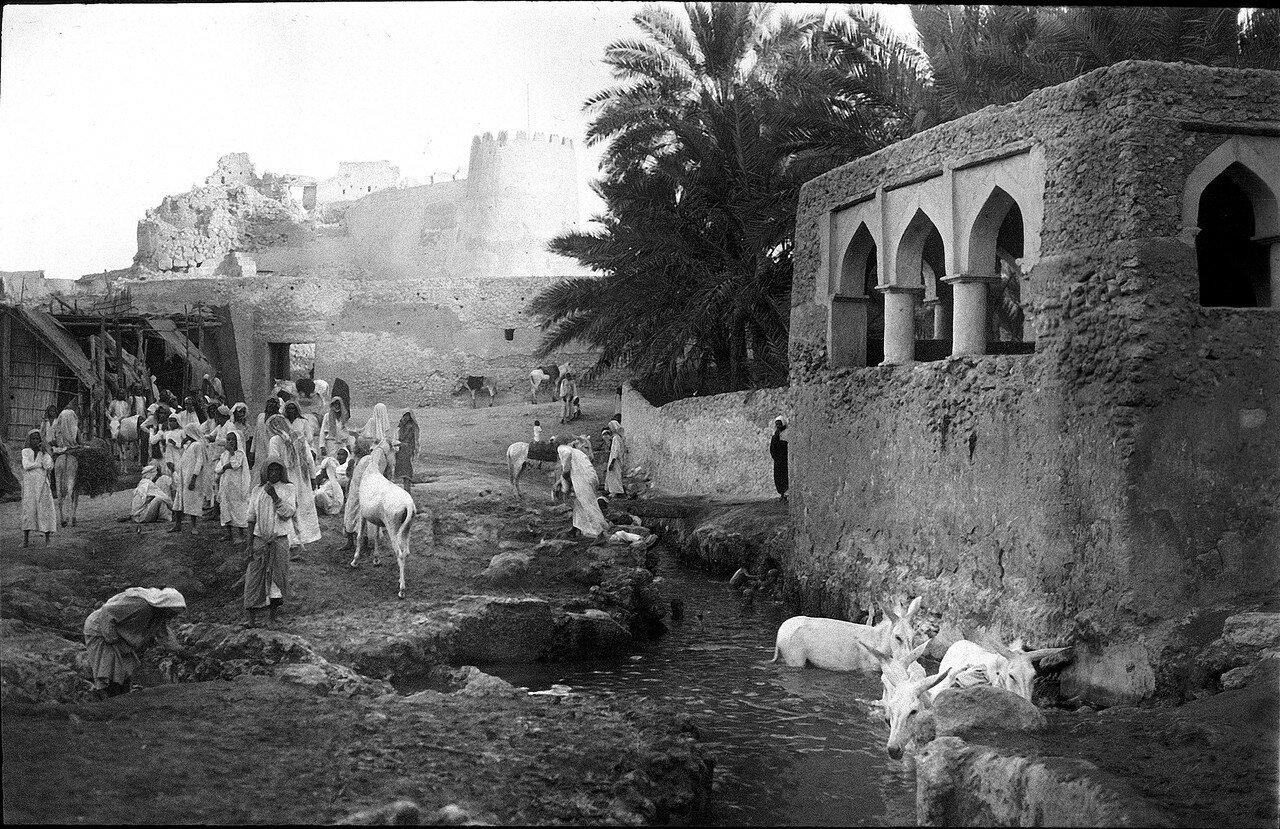 Саудовская Аравия. Остров Тарут