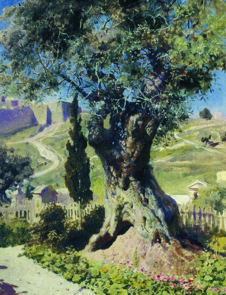 Олива в Гефсиманском саду. 1882.jpg