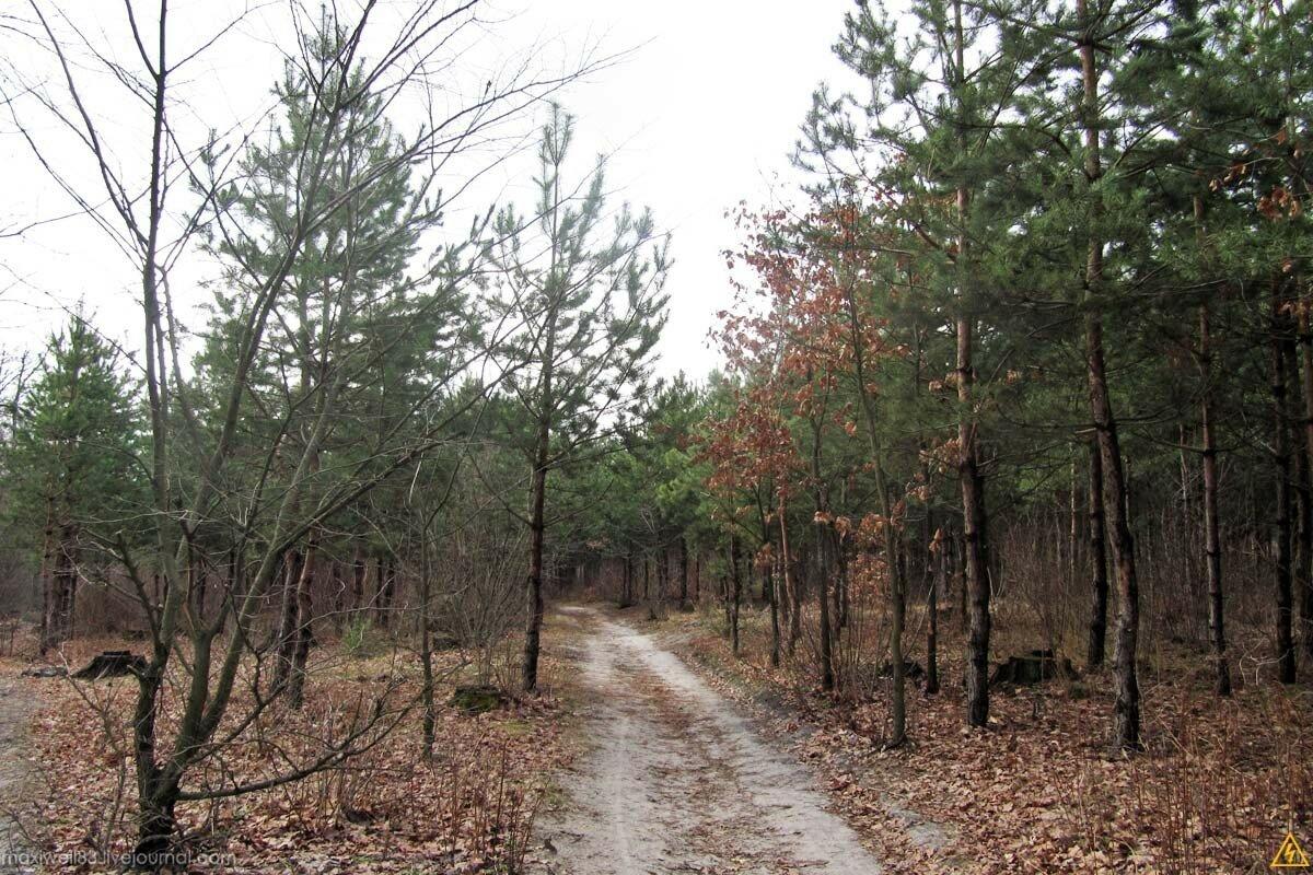 Прогуляночка по лісу-3