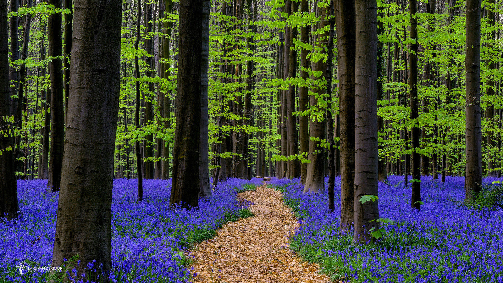 poetry of nature Best nature poems | poetry below are the all-time best nature poems written by poets on poetrysoup these top poems in list format are the best examples of nature poems written by poetrysoup members.