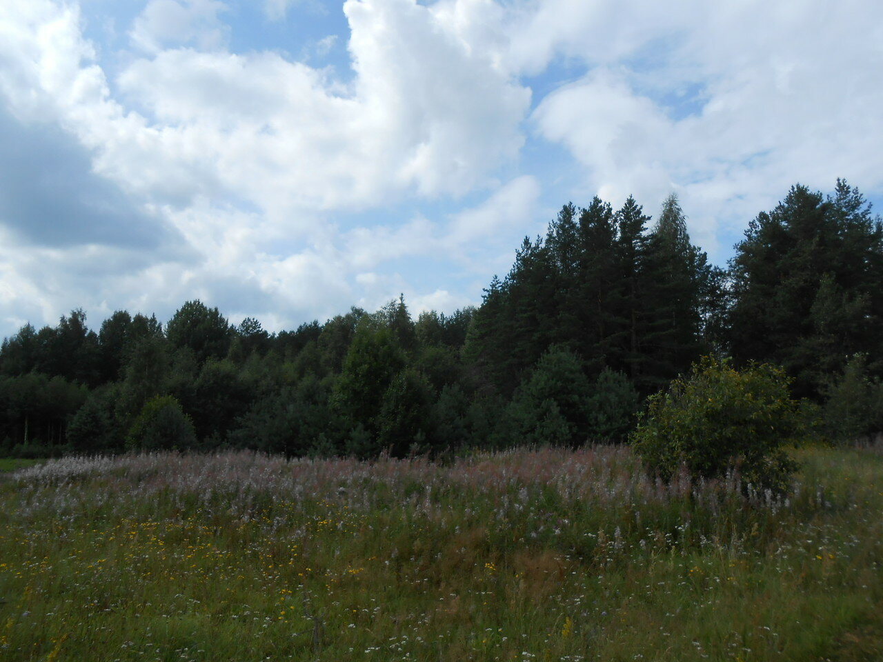 На окраине деревни Долгие Бороды
