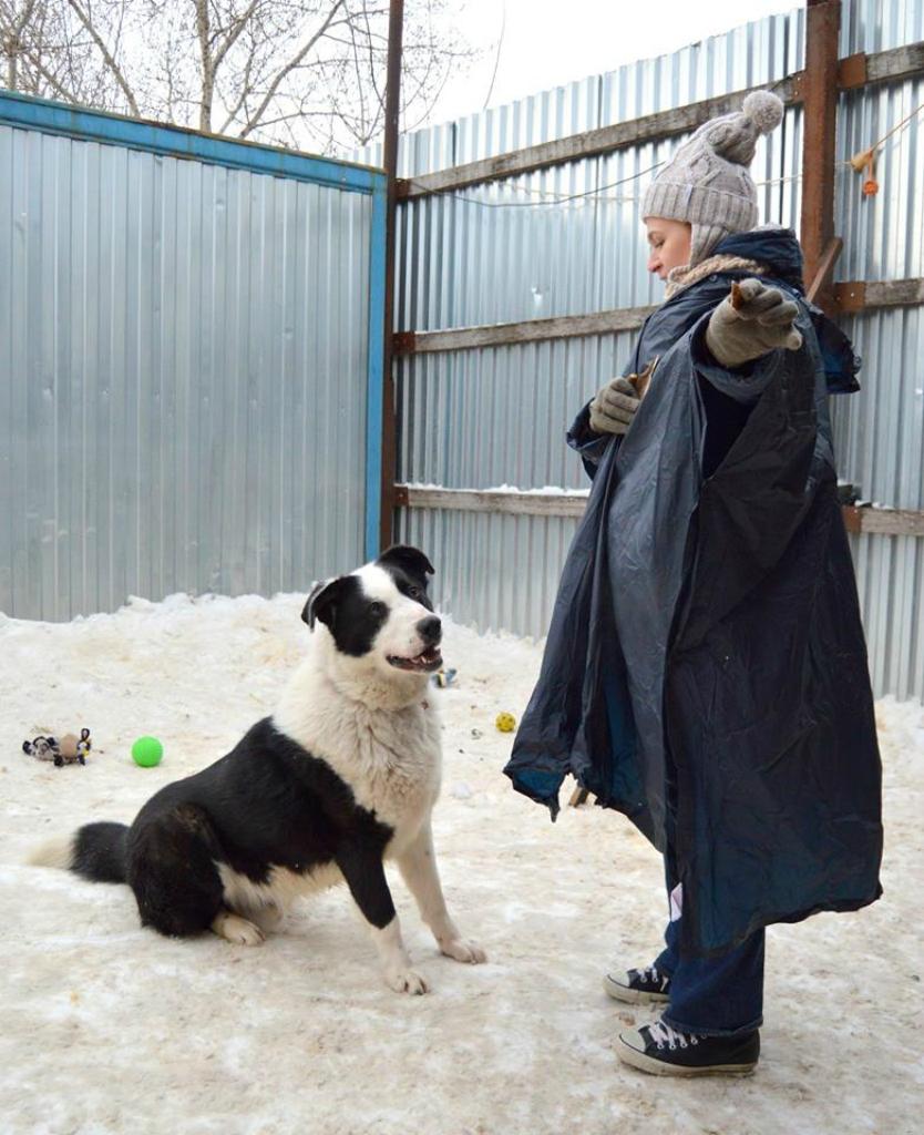 Брюс собака из приюта догпорт