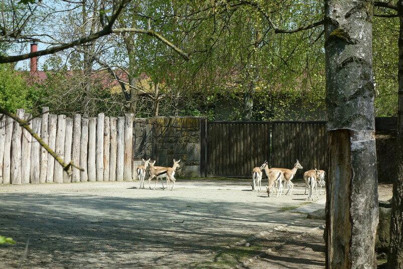 Путешествия: Зоо и сафари в городе Двур Кралове над Лабем. Часть 2.