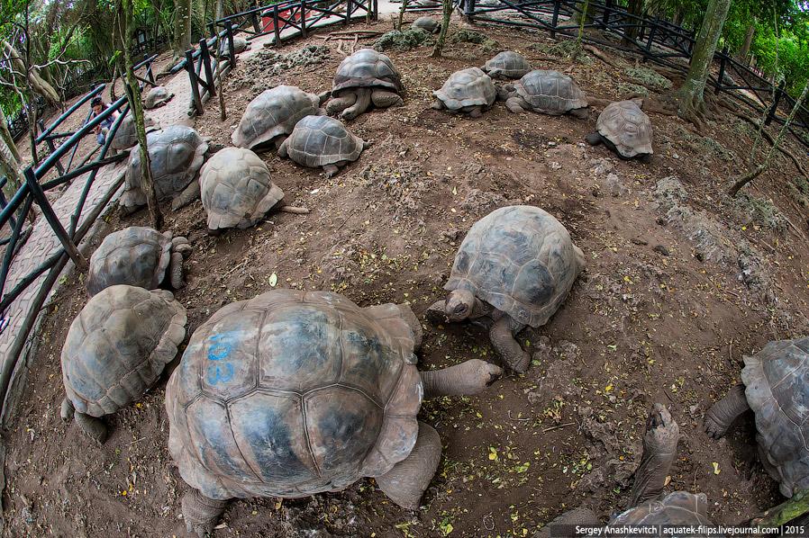 3. В естественной среде эти черепахи обитают на открытых участках с травостоем, кустарниковыми