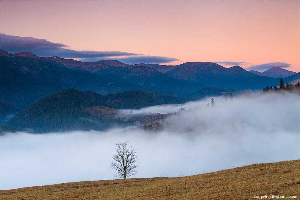Порой туман захлестывает всю долину, и тогда видны только макушки деревьев, словно бакены плыву