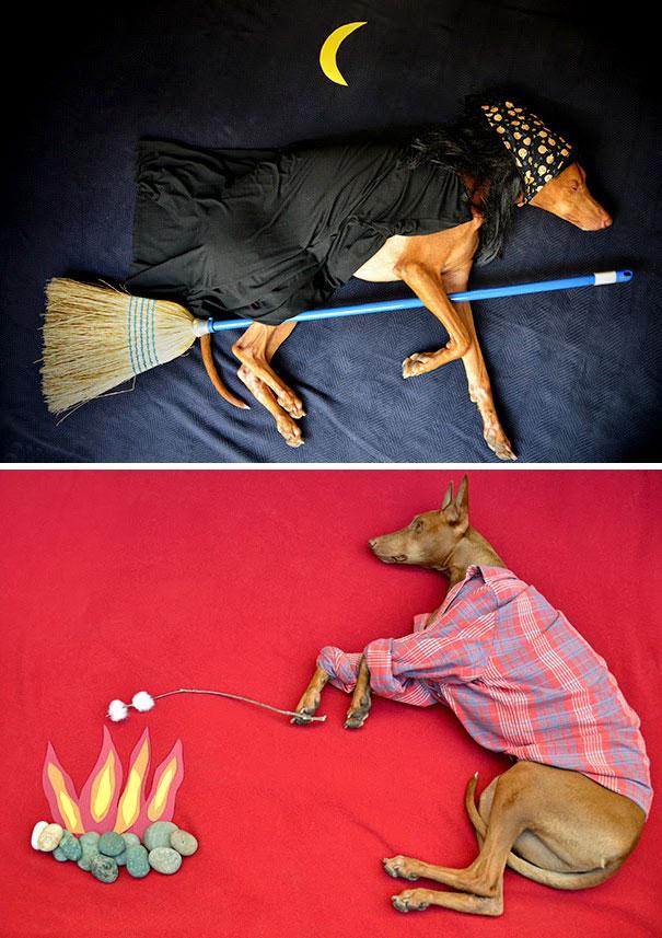 Пока собака спит, ее хозяйка помещает ее в сказочный мир приключений и фотографирует.