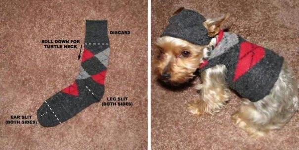 Даже из простого носка можно сделать милый костюмчик для маленькой собаки.