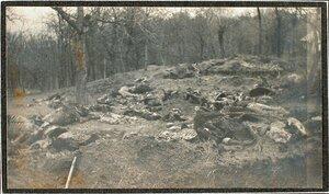 Лошади, убитые перед сдачей крепости (у деревни Седласка).