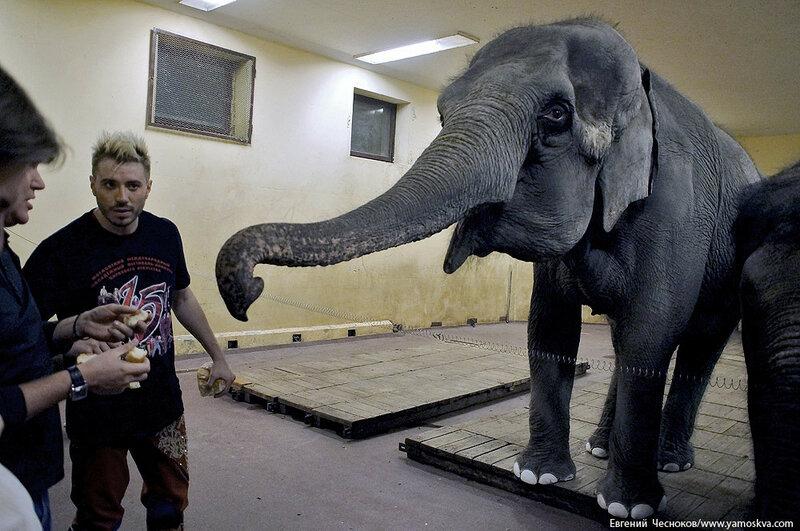 Осень. БРАВО. слоны Т.Корниловой. 14.10.16.08..jpg