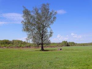 Во поле берёза стояла