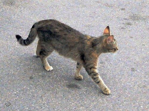 Обычный котик