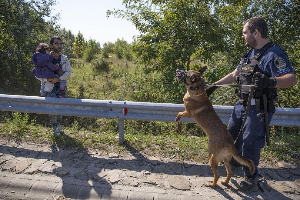 14. Раздача хлеба в лагере для мигрантов, Сербия, 7 сентября 2015. (Фото Win McNamee):