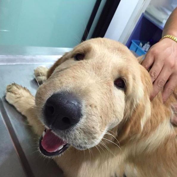 Собаки, которые съели пчелу и очень об этом жалеют (17 фото)