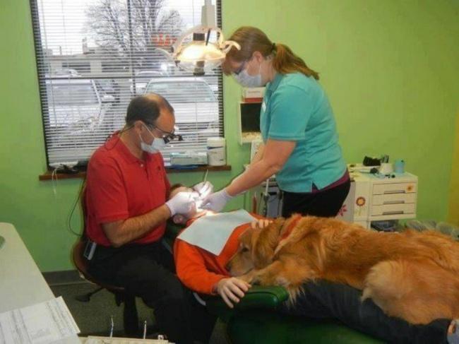Золотистый ретривер покличке Брук помогает детям справиться сострахом наприеме устоматолога