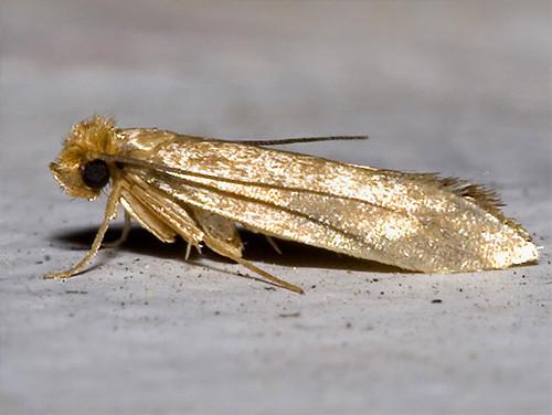 9. Моль Эти неприметные бабочки могут не только сделать дыру в одежде из натуральных материалов, но