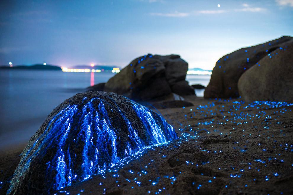 3. Само название «биолюминесценция» буквально означает «слабое живое свечение». Однако человечеству