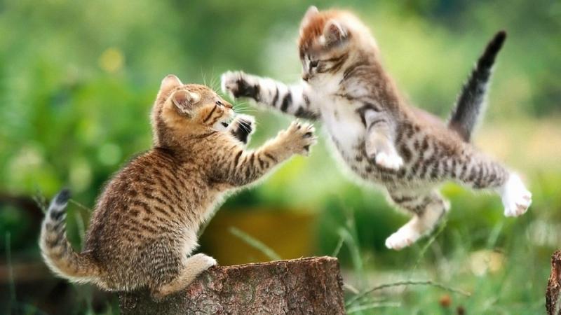 809095-animals-cats-hugging-kittens.jpg