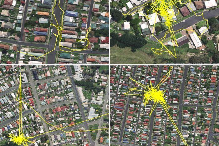 GPS-передатчик показал передвижения кошки