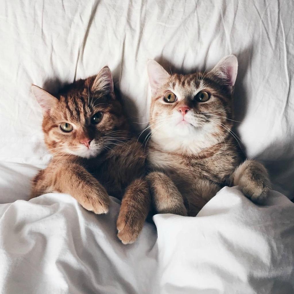выходные, кот, котики, коты, отдых, подушка, постель, шеф, опоздание, время, час, милахи