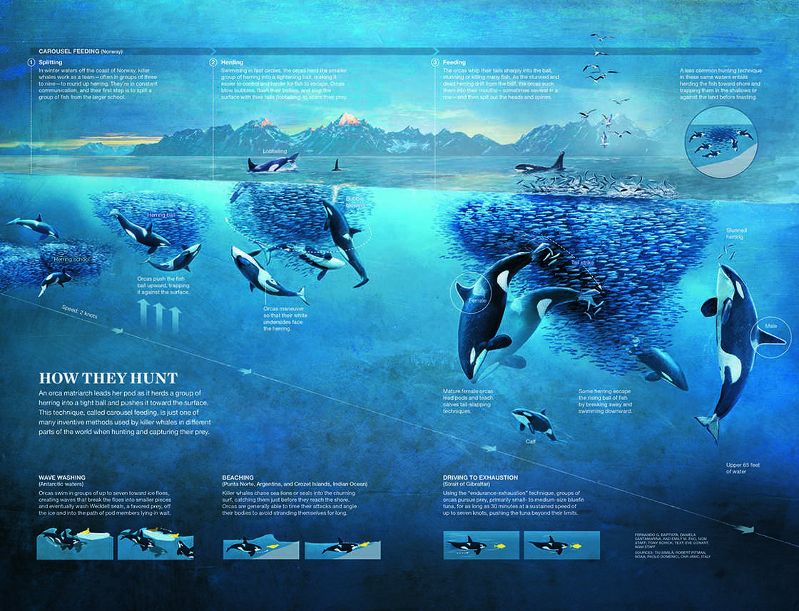 The most beautiful infographics from National Geographic
