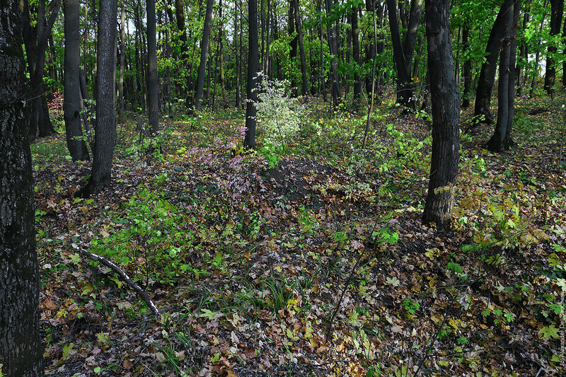 Монастырский лес - следы окопов