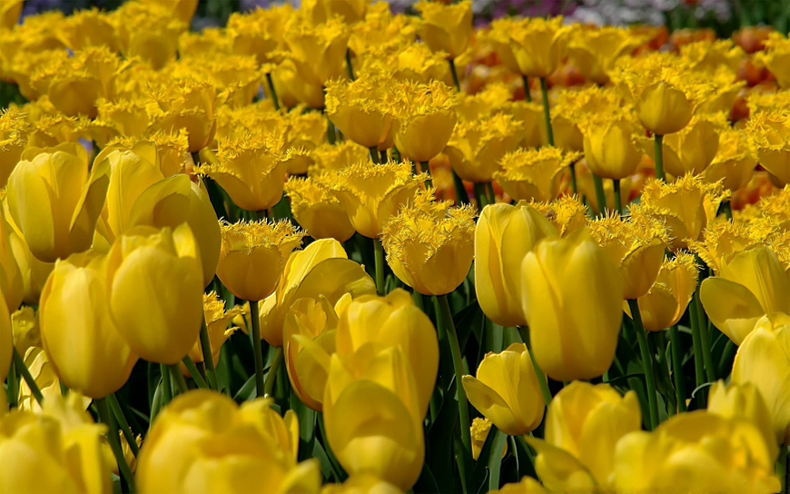 Желтые цветы в природе