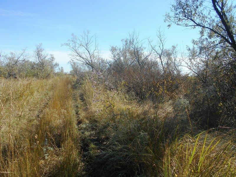 Виднеются дорожки ... Лесок и травы ... DSCN9578.JPG