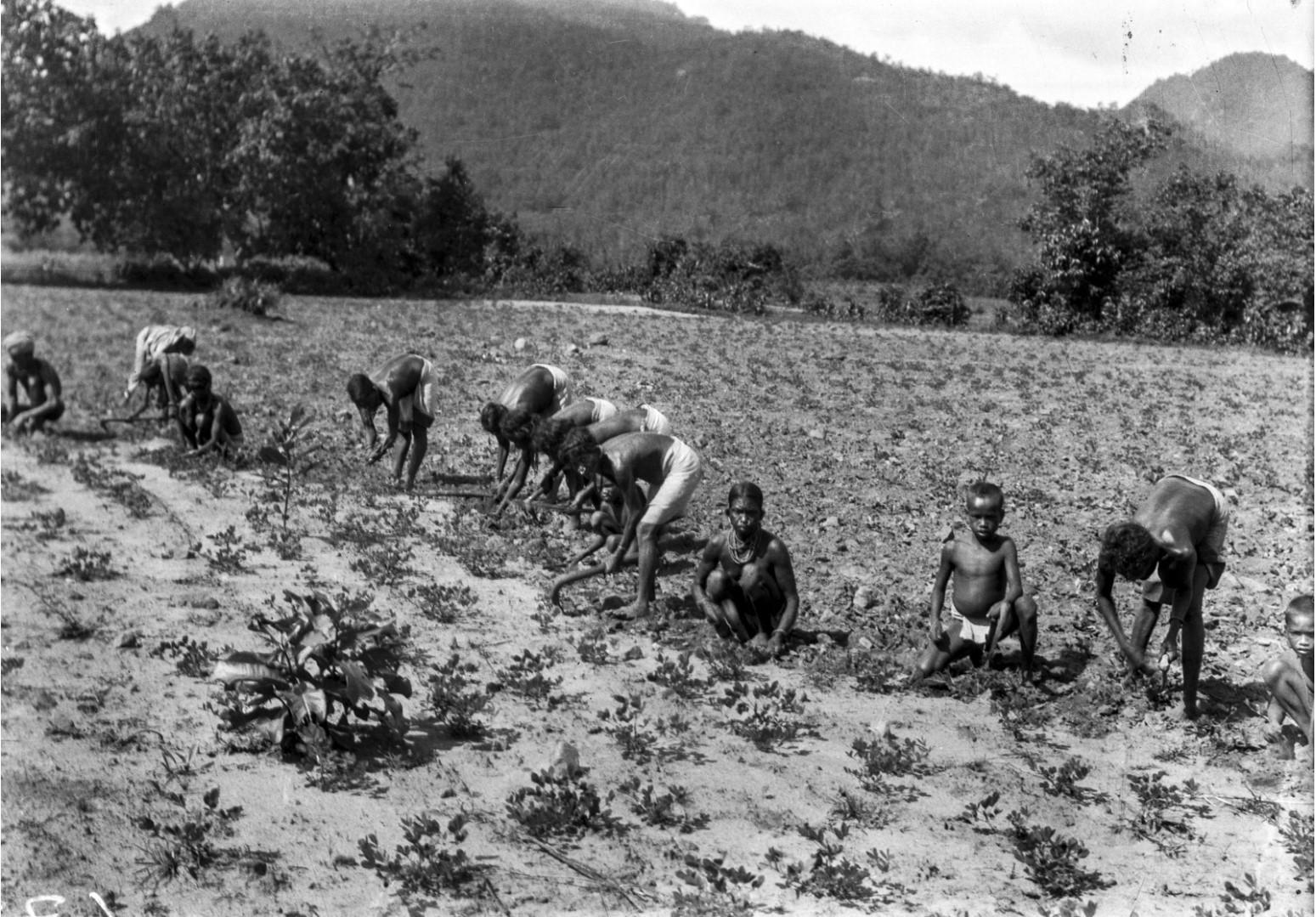 733. Орисса. Люди работают в поле