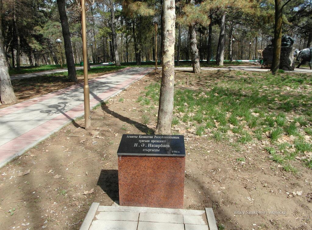 Дендропарк Шымкента, дерево Назарбаева