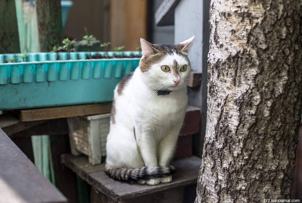 5. Зритель был не один. Оказывается, и со второго этажа тоже наблюдали. Ну прямо кошачий двор.