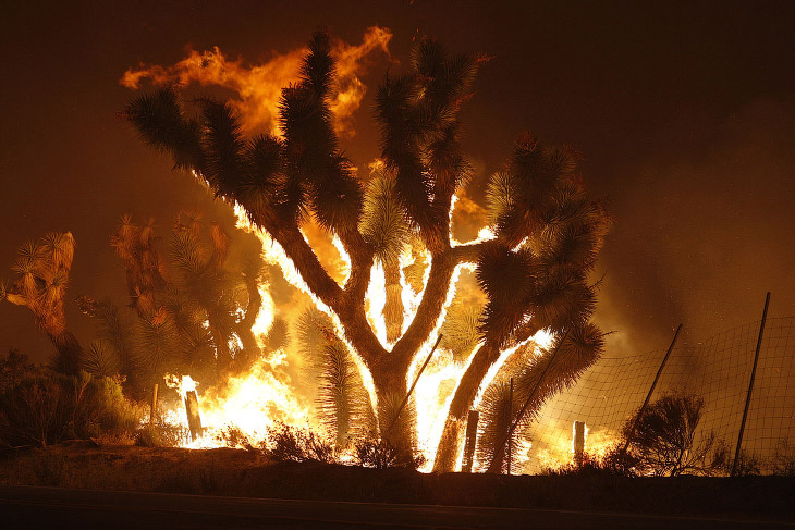 Причины возникновения лесных пожаров обычно делят на естественные (природные) и антропогенные (