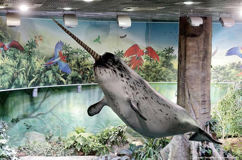 Зима. Москвариум. аквариум. 09.12.16.33..jpg