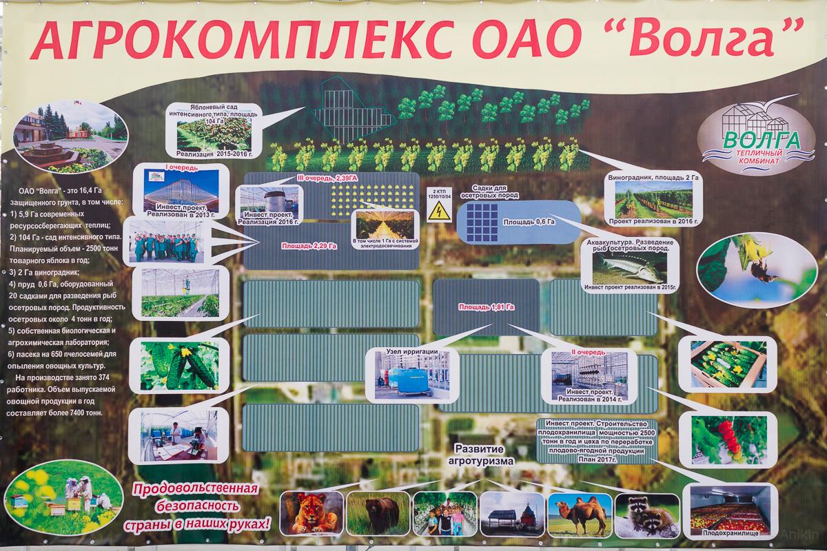 Агрокомплекс Волга выращивание огурцов фото 14