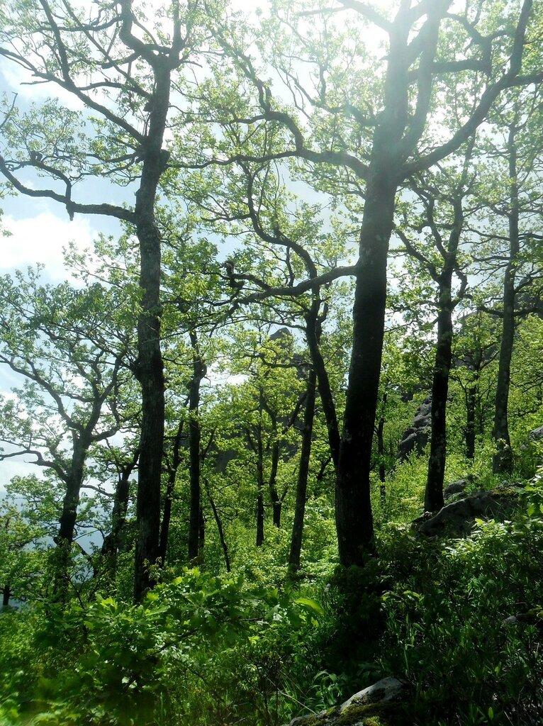В горном лесу, весенний день ... SAM_6997.JPG