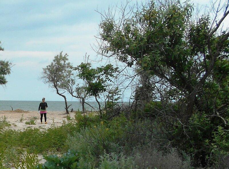 Лес, у моря, в походе ... DSCN5931.JPG