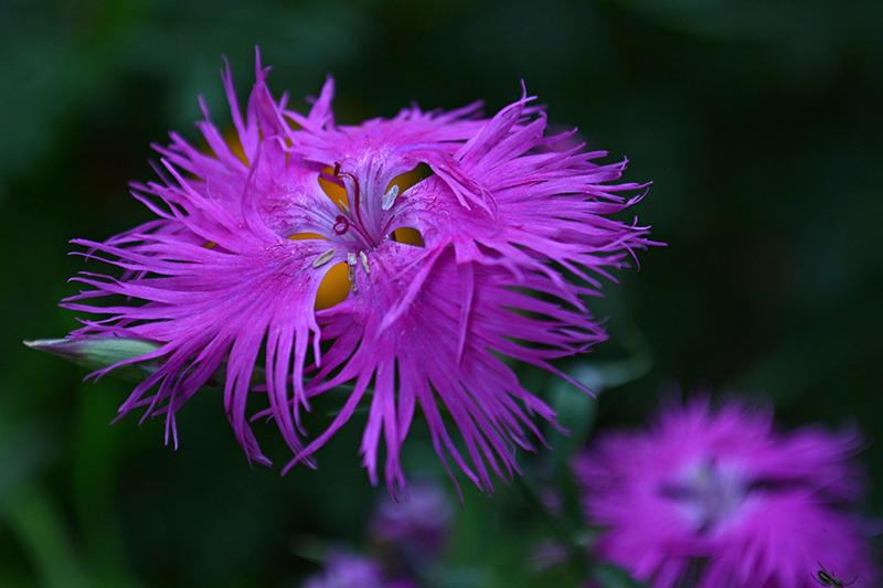 цветы дождливый день 5.jpg