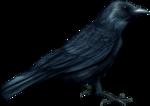 Raven1-GI_ThePunishment.png