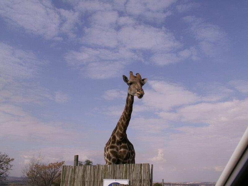 ЮАР, Йоханнесбург, Львиный парк